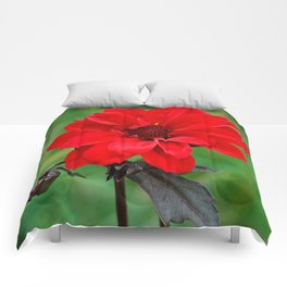 Dahlia 'Bishop of Llandaff' Crimson Red Flower Comforters