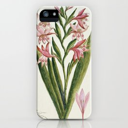 Robert Jacob Gordon - Gladiolus carneus D. Delarochev - 1777 - 1786 iPhone Case