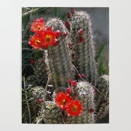 New Mexico Cactus Poster