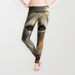 Lioness from Africa Leggings