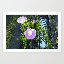 Japanese Blossom Art Print