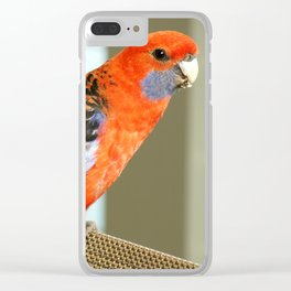 Crimson Rosella Clear iPhone Case