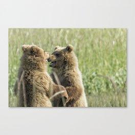 Brown Bear Cubs - Face Off Canvas Print