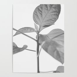lilled Poster