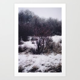 Another Snowy Shrubbery Art Print