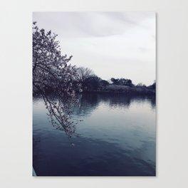 Cherry Blossom in Washington DC Canvas Print