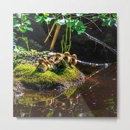 Mallard ducklings on a stone Metal Print