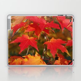 Fiery Autumn Maple Leaves 4966 Laptop & iPad Skin