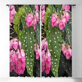 DROOPING PINK BEGONIA FLOWER SPRAYS ON BLACK Blackout Curtain
