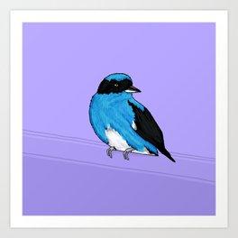 Swallow Tanager Art Print
