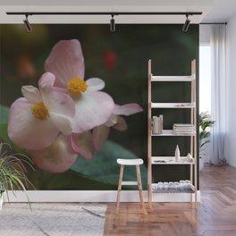 Wax Begonia Flowers Wall Mural