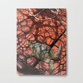Maryland Crab Metal Print