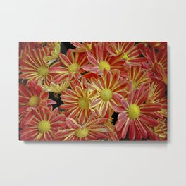 Red, Pink and Yellow Garden Mums Metal Print
