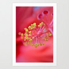 inside-hibiscus  Art Print