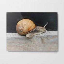 Snail crawling the green grass in garden Metal Print