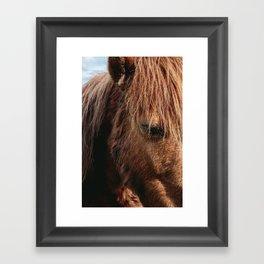 Brooding Pony Framed Art Print