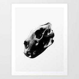 White Lion Skull Art Print
