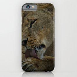 Lioness Licking Her Paw iPhone Case