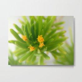 Blooming Succulent Metal Print