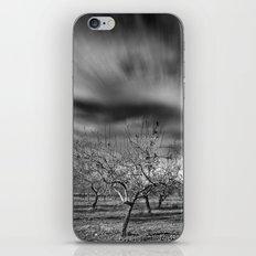 Rural Beauty. Almond fields iPhone & iPod Skin