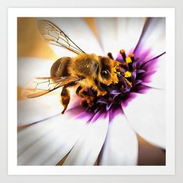 Springtime Honeybee On White African Daisy Art Print