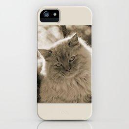Sunlit Cat in Sepia iPhone Case