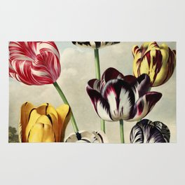 Tulips : Temple of Flora of New illustration of the sexual system of Carolus von Linnaeus Rug