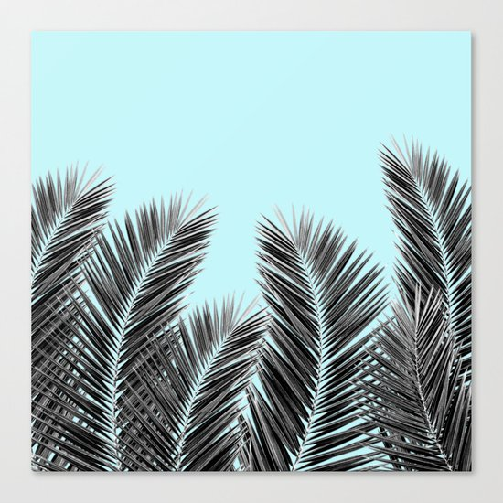Clear Palm Skies Canvas Print