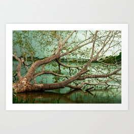 Wandering Branches Art Print