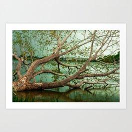 Wandering Branches Art Print