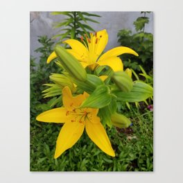 Yellow Lilies Canvas Print