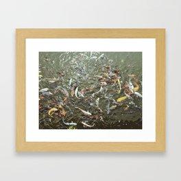 Coi Fish Framed Art Print