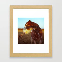 The Shire Horse Framed Art Print