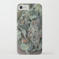 medical iPhone & iPod Cases featuring Master Kush Medical Marijuana by BudProducts.us