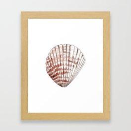 Seashell #2 Framed Art Print