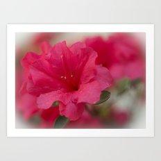 Pink Azalea  Art Print