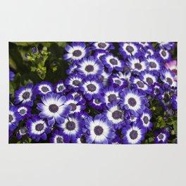 Cineraria Purple Rug