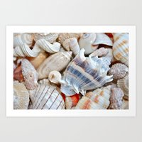 shells Art Prints featuring Shells by Taylor Payne