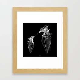 Kingfisher Father & son 1a. White on black background-(Red eyes series) Framed Art Print