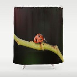 Ladybug On A Twig Shower Curtain