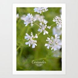 Coriander in flowers III Art Print