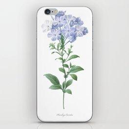 HIGHEST QUALITY botanical poster of Plumbago iPhone Skin
