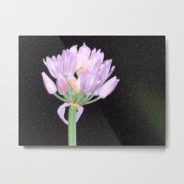 Chives Single Flower Metal Print