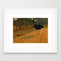 ostrich Framed Art Prints featuring Ostrich by Ramsay