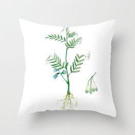 Lentil Throw Pillow