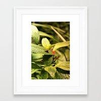 cosima Framed Art Prints featuring Love Bugs by Cosima Higham