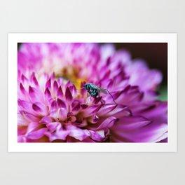 A Fly & A Flower Art Print