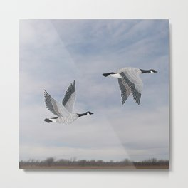 Canada geese and blue sky Metal Print