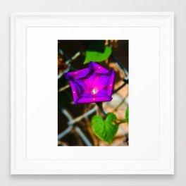 Purple Blossom On A Vine Framed Art Print