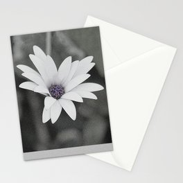 African Daisy Flower Closing its Petals Stationery Cards